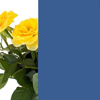 Farbglas Capriblaum RAL 5019